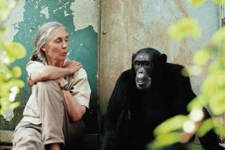 Jane Goodall and chimpanzee Freud