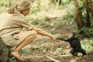 Jane Goodall and baby chimp